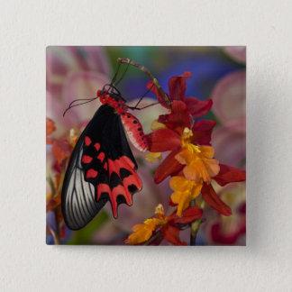 Sammamish, Washington. Tropical Butterflies 12 15 Cm Square Badge