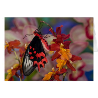 Sammamish, Washington. Tropical Butterflies 12 Card