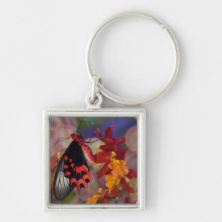 Sammamish, Washington. Tropical Butterflies 12 Key Ring