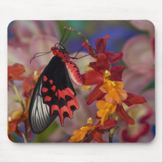 Sammamish, Washington. Tropical Butterflies 12 Mouse Mat