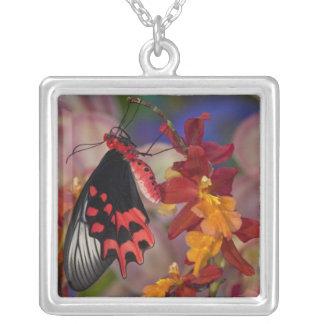 Sammamish, Washington. Tropical Butterflies 12 Necklaces
