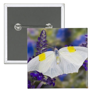 Sammamish, Washington. Tropical Butterflies 13 Pinback Button