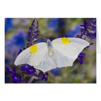 Sammamish, Washington. Tropical Butterflies 13 Card