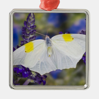 Sammamish, Washington. Tropical Butterflies 13 Christmas Ornament