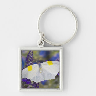 Sammamish, Washington. Tropical Butterflies 13 Key Ring