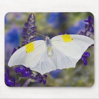 Sammamish, Washington. Tropical Butterflies 13 Mouse Mat
