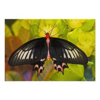 Sammamish, Washington. Tropical Butterflies 13 Photo Print
