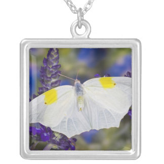 Sammamish, Washington. Tropical Butterflies 13 Silver Plated Necklace