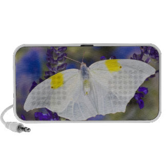 Sammamish, Washington. Tropical Butterflies 13 Speaker System