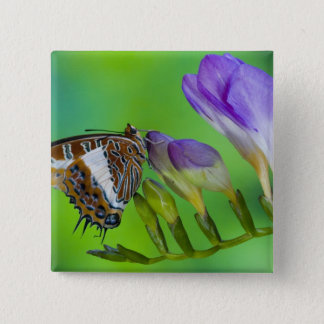 Sammamish, Washington. Tropical Butterflies 14 15 Cm Square Badge