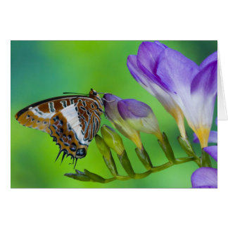 Sammamish, Washington. Tropical Butterflies 14 Card