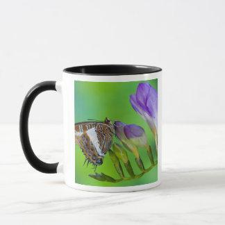 Sammamish, Washington. Tropical Butterflies 14 Mug
