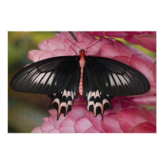 Sammamish, Washington. Tropical Butterflies 14 Photo Print