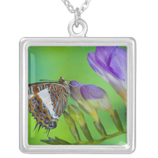 Sammamish, Washington. Tropical Butterflies 14 Square Pendant Necklace