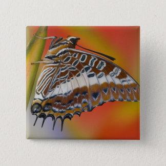Sammamish, Washington. Tropical Butterflies 15 15 Cm Square Badge