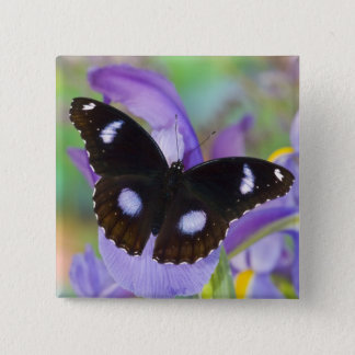 Sammamish Washington Tropical Butterflies 15 Cm Square Badge