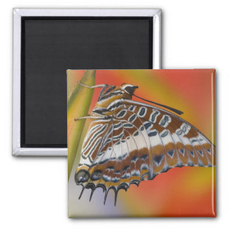 Sammamish, Washington. Tropical Butterflies 15 Magnet