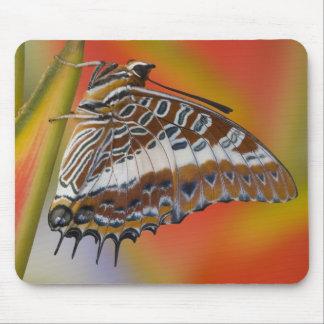 Sammamish, Washington. Tropical Butterflies 15 Mouse Mat