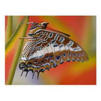 Sammamish, Washington. Tropical Butterflies 15 Postcard