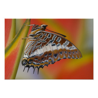 Sammamish, Washington. Tropical Butterflies 15 Poster