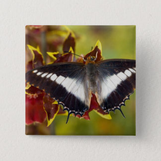 Sammamish, Washington. Tropical Butterflies 16 15 Cm Square Badge