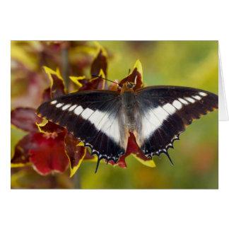 Sammamish, Washington. Tropical Butterflies 16 Card