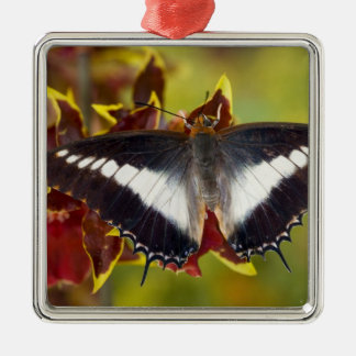 Sammamish, Washington. Tropical Butterflies 16 Christmas Ornament