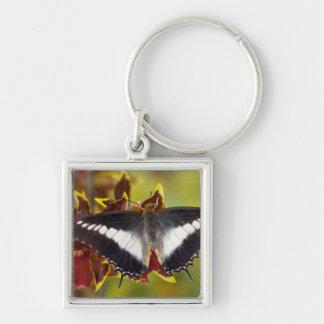 Sammamish, Washington. Tropical Butterflies 16 Key Ring