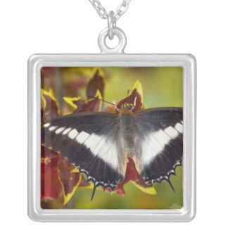 Sammamish, Washington. Tropical Butterflies 16 Custom Jewelry