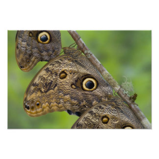 Sammamish, Washington. Tropical Butterflies 16 Photo Print