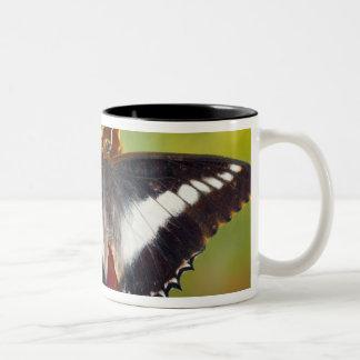 Sammamish, Washington. Tropical Butterflies 16 Two-Tone Coffee Mug