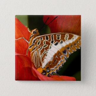 Sammamish, Washington. Tropical Butterflies 17 15 Cm Square Badge