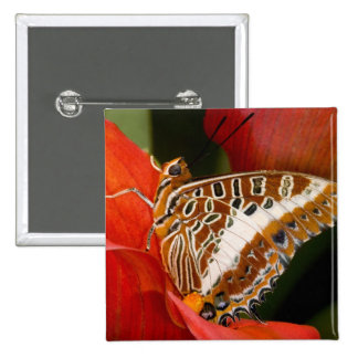 Sammamish, Washington. Tropical Butterflies 17 Pins