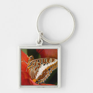 Sammamish, Washington. Tropical Butterflies 17 Key Ring