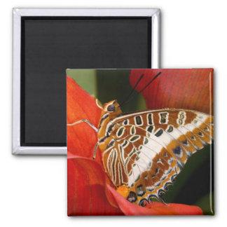 Sammamish, Washington. Tropical Butterflies 17 Magnet