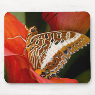 Sammamish, Washington. Tropical Butterflies 17 Mouse Mat