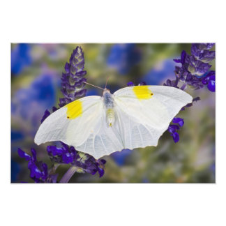 Sammamish, Washington. Tropical Butterflies 17 Photo Print