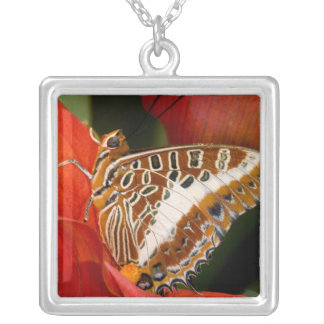 Sammamish, Washington. Tropical Butterflies 17 Silver Plated Necklace