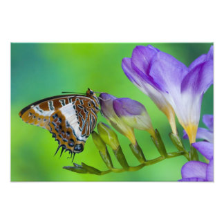 Sammamish, Washington. Tropical Butterflies 18 Photo Print