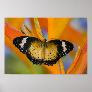 Sammamish, Washington. Tropical Butterflies 18 Poster