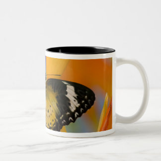 Sammamish, Washington. Tropical Butterflies 18 Two-Tone Coffee Mug