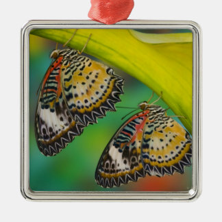 Sammamish, Washington. Tropical Butterflies 19 Christmas Ornament