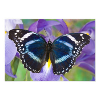 Sammamish, Washington. Tropical Butterflies 19 Photo Print