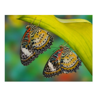 Sammamish, Washington. Tropical Butterflies 19 Postcard