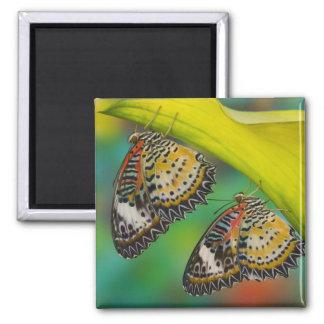 Sammamish, Washington. Tropical Butterflies 19 Square Magnet