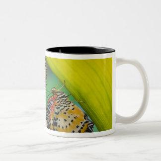 Sammamish, Washington. Tropical Butterflies 19 Two-Tone Coffee Mug
