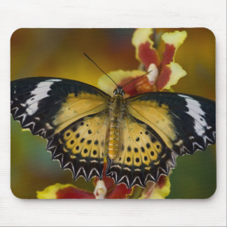 Sammamish, Washington. Tropical Butterflies 20 Mouse Mat