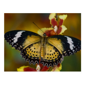 Sammamish, Washington. Tropical Butterflies 20 Postcard