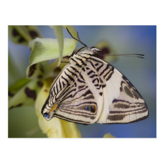 Sammamish, Washington. Tropical Butterflies 21 Postcard