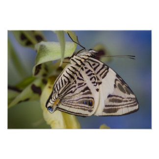 Sammamish, Washington. Tropical Butterflies 21 Poster